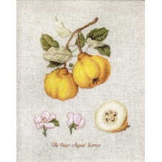 The Pear Shaped Quince