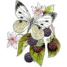 Bramble Butterfly Wood Mounted Stamp