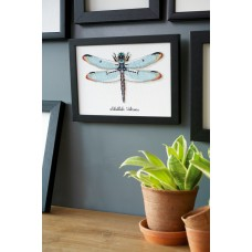 Counted Cross Stitch Kit: Dragonfly