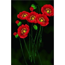 No Count Cross Stitch - Poppies on Black