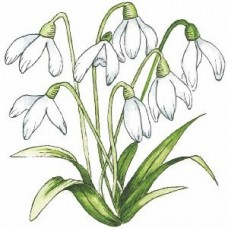 Snowdrops -  Wood Mounted Stamp