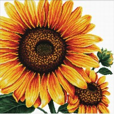 No Count Cross Stitch - Sunflower